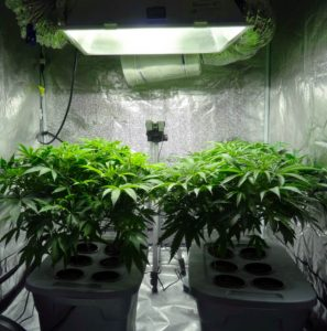 best-led-grow-lights-reviews-for-the-money-2018